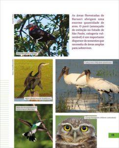página 15 da Revista Barueri e a Mata Atlântica